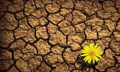 resilience flower